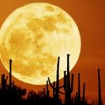 harvestmoom2010 150x150 Autumn Moon