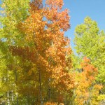 0011 150x150 Autumn in Colorado ~