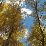 051 e1286314309977 150x150 Autumn in Colorado ~