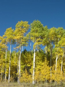IMG 0993 225x300 Autumn in Colorado