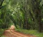 ga road 150x127 Those Red Dirt Roads ~
