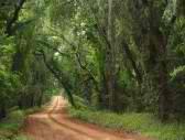 ga road georgia road