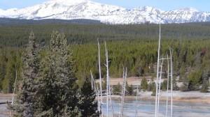 DSC00652 300x168 Yellowstone