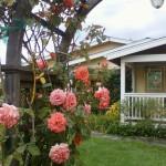 front yard2 150x150 Springtime  Smiles ~