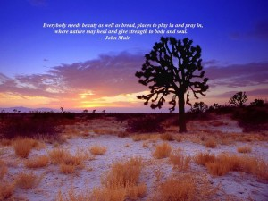 joshua tree sunset  mojave desert  california 300x225 Desert Blooms ~