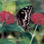 swallowtail1 150x150 Springtime  Smiles ~