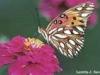 www.butterfliesabound.com